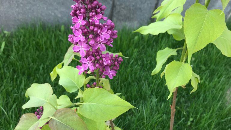 Цветы неравнодушных