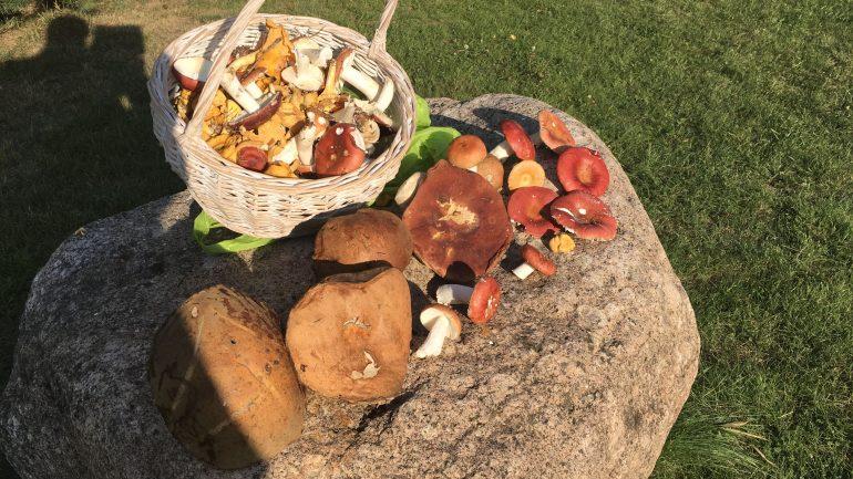 Первые грибы на Селигере