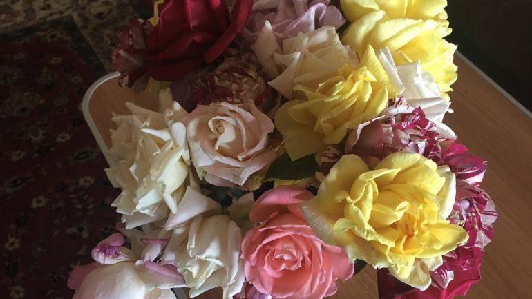 Розы в ноябре